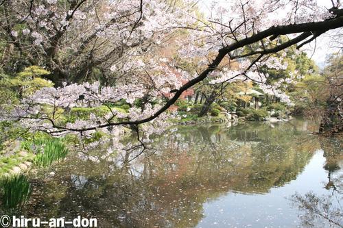 日比谷公園の桜 その1