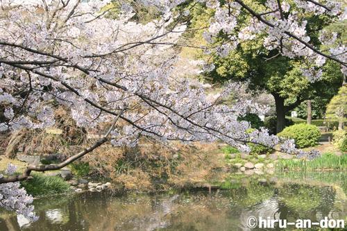 日比谷公園の桜 その2