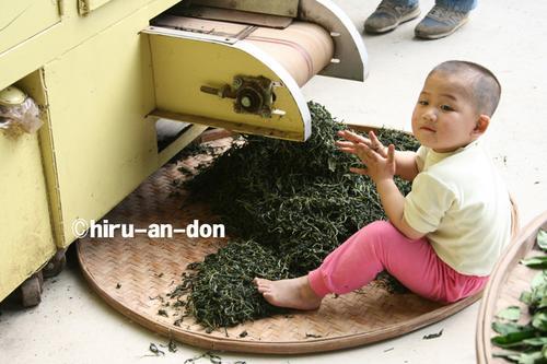 蘇志成茶師の息子さん