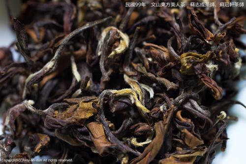 民國99年 文山東方美人 蘇志成茶師、蘇冠軒茶師