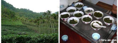坪林の蘇茶師の茶畑とたくさんの文山包種茶を飲めますよ