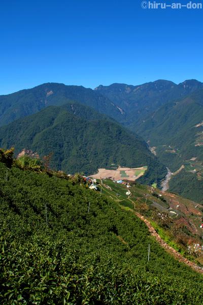 梨山 翠峰茶区