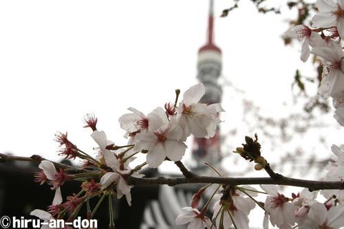 増上寺その2